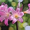 アマリリスの植物図鑑と育て方