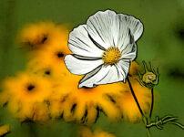 コスモスの植物図鑑と育て方