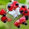 ゴンズイの植物図鑑と育て方
