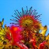 モウセンゴケの植物図鑑と育て方