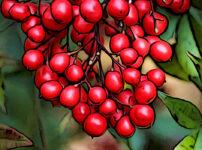 ナンテンの植物図鑑と育て方