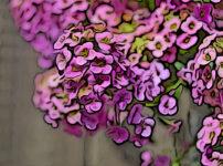 ニワナズナの植物図鑑と育て方