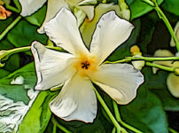 テイカカズラの植物図鑑と育て方