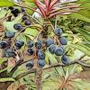 ユズリハの植物図鑑と育て方