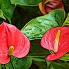 アンスリウムの植物図鑑と育て方