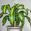 ドラセナの植物図鑑と育て方