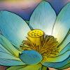 ハスの植物図鑑と育て方