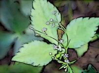 ミツバの植物図鑑と育て方