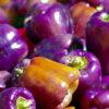 紫のパプリカ