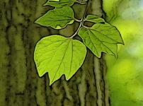 ダンコウバイの植物図鑑と育て方