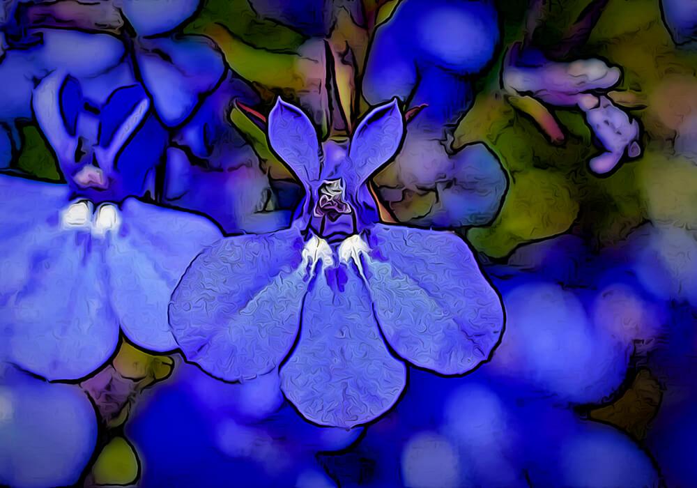 ロベリアの植物図鑑と育て方
