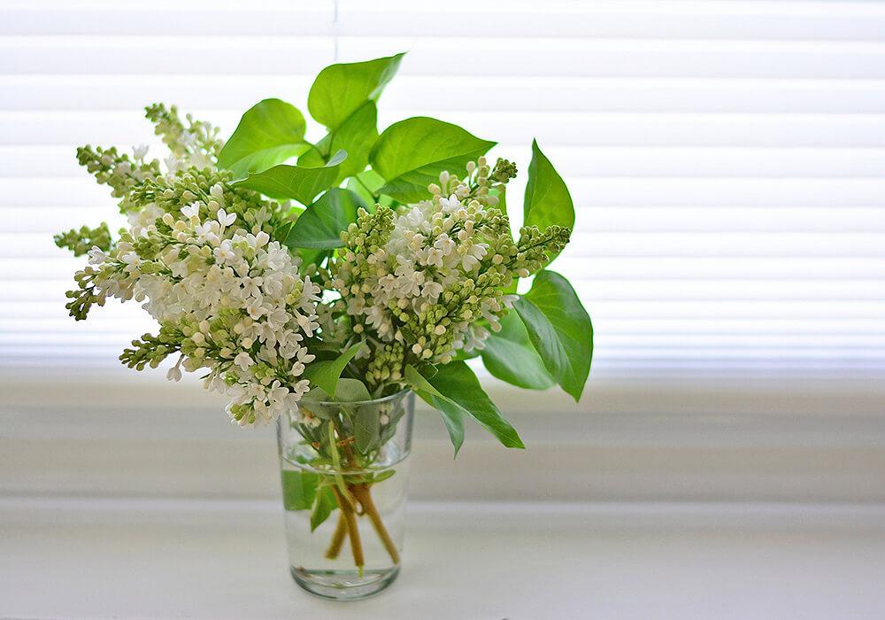 ライラックの切り花