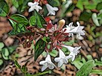 アベリアの植物図鑑と育て方