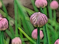 アサツキの植物図鑑と育て方