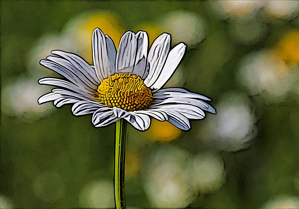 植物図鑑と育て方