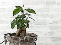 ガジュマルの植物図鑑と育て方