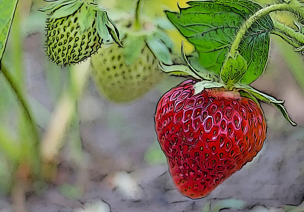 イチゴの植物図鑑と育て方