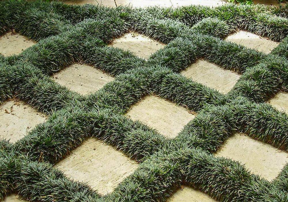 網目に植えたジャノヒゲ