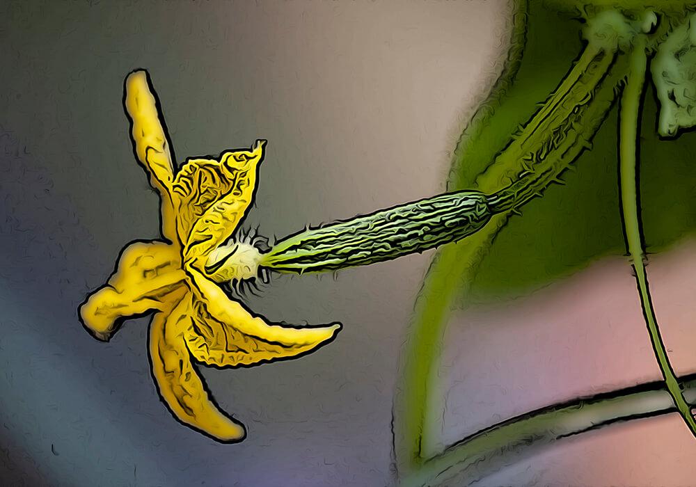 キュウリの植物図鑑と育て方