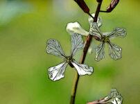 ルッコラの植物図鑑と育て方