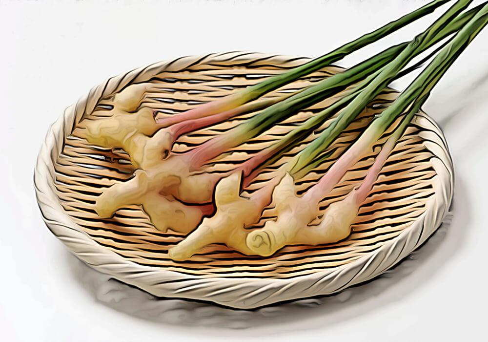 ショウガの植物図鑑と育て方