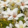 アブラギリの植物図鑑と育て方
