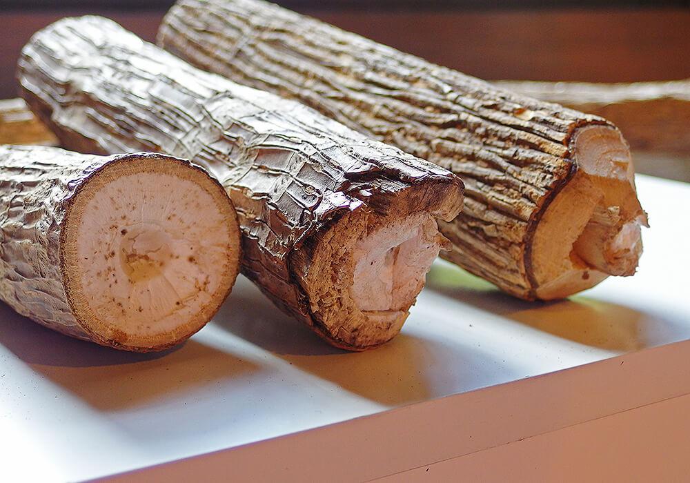 カミヤツデの幹の髄