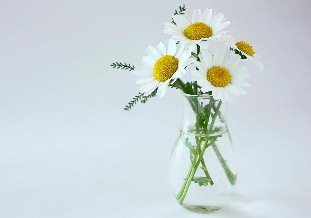 カンシロギクの生け花