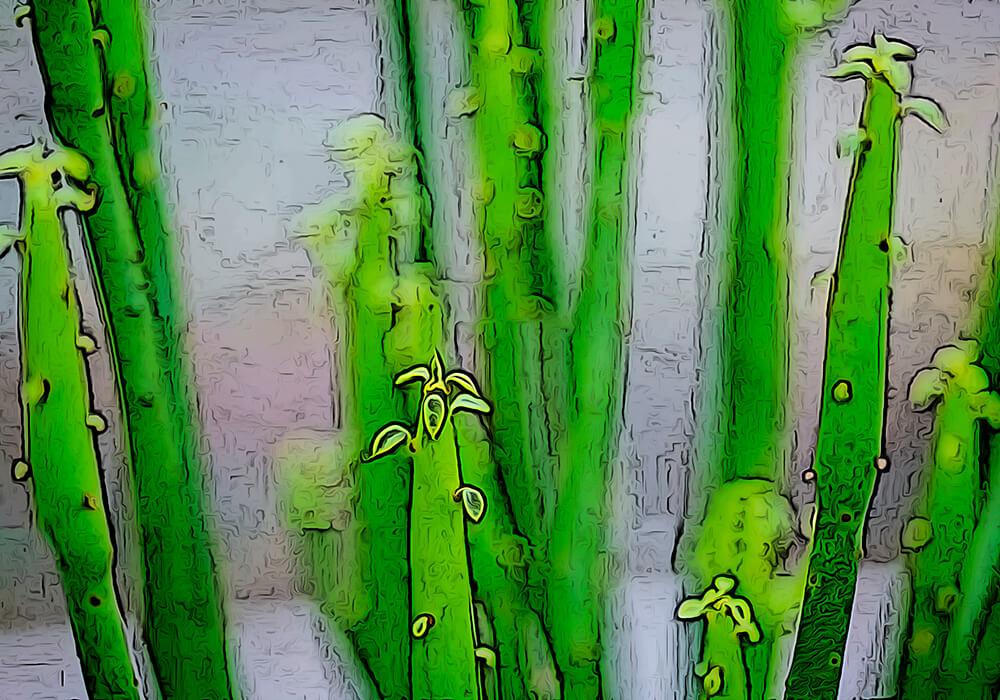 ミドリサンゴの植物図鑑と育て方