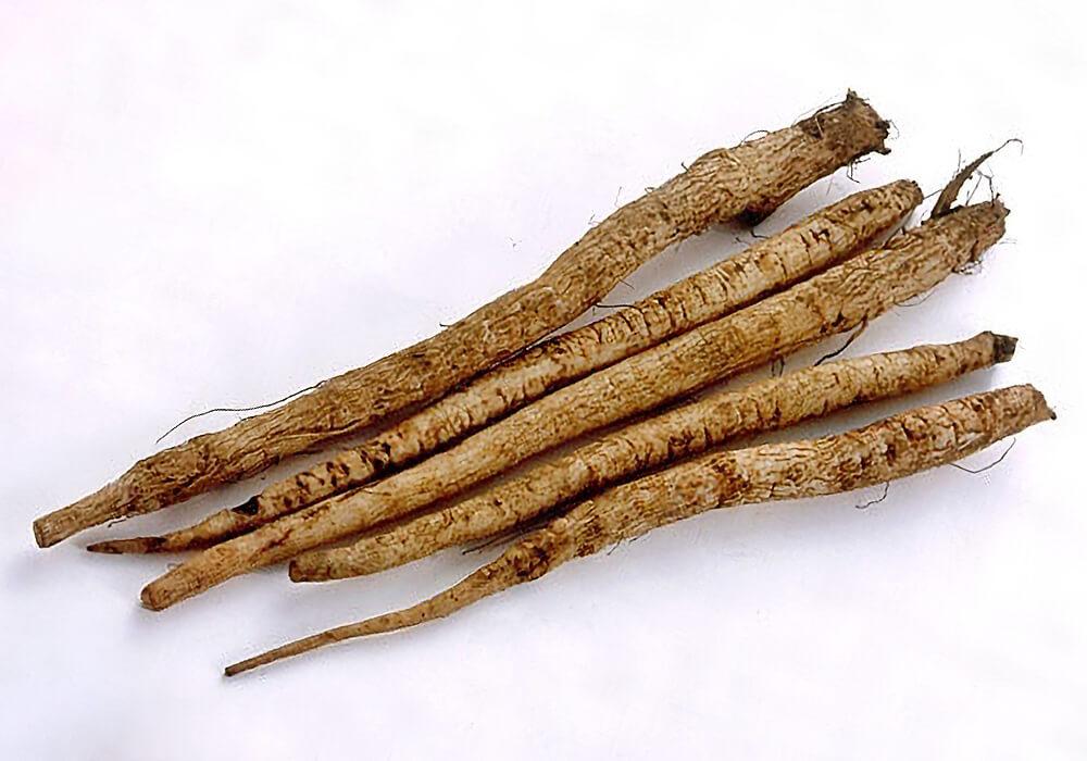 モリアザミの根