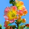 タチアオイの植物図鑑と育て方