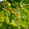 ウバメガシの植物図鑑と育て方