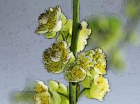 アオモジの植物図鑑と育て方