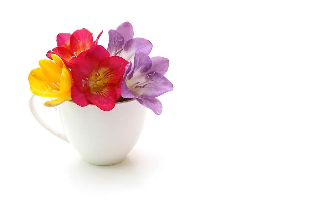 かわいいフリージアの花
